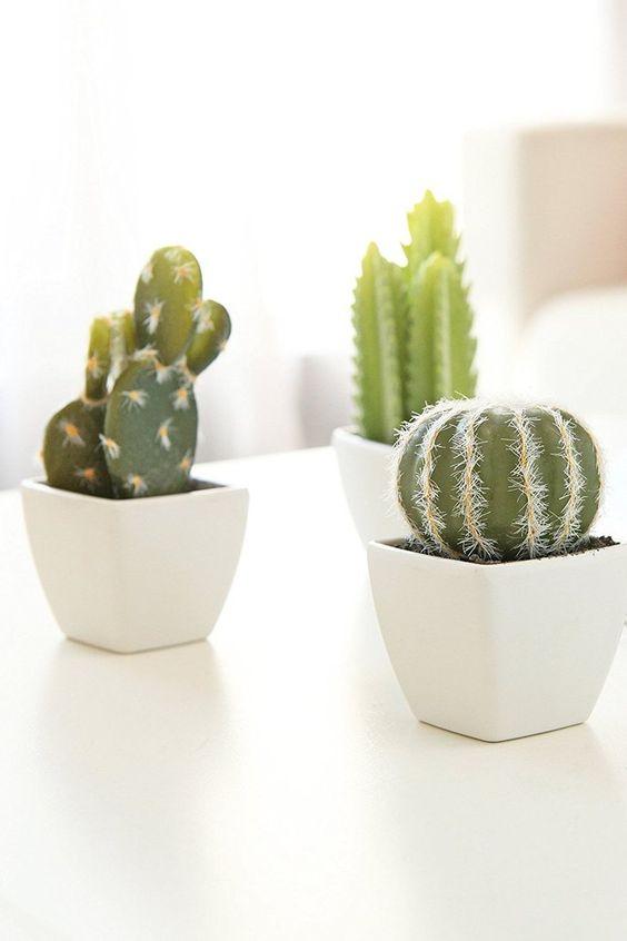 beautiful cactus plants