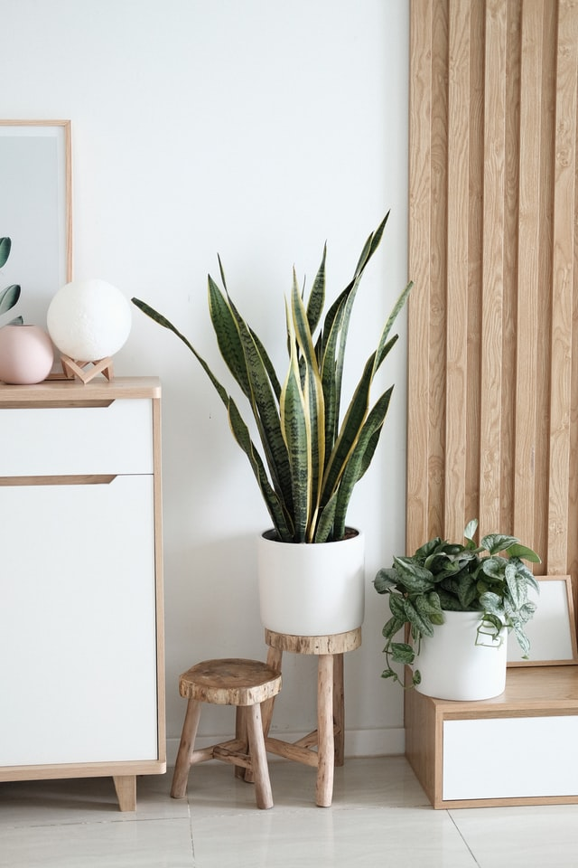 indoor plants decors